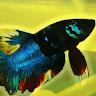 Profile picture of Lutvi