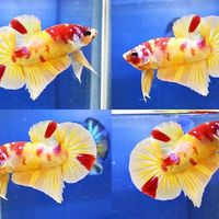 Profile picture of บ้านปลากัด สวยงาม